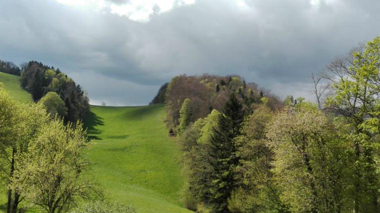 Combe où paissent souvent chamois et chevreuils<br>Malerisches Tälchen, wo oft Gämsen und Rehe weiden