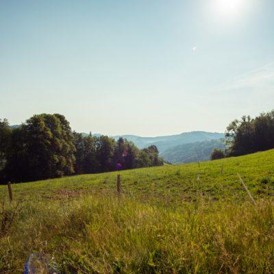 Une nature riche et variée dans un domaine en reconversion biologique<br>Unbezahlbare Vielfalt: Die Grünlandflächen werden derzeit auf Biolandbau umgestellt