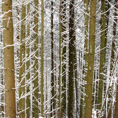 Le mot « joux » désigne une montagne boisée, le plus souvent en résineux.<br>Der Begriff «joux» bezeichnet einen bewaldeten Berg, wobei der Wald meist aus Nadelbäumen besteht.